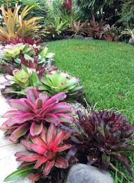 Small Picture Best 25 Florida plants ideas on Pinterest Florida landscaping