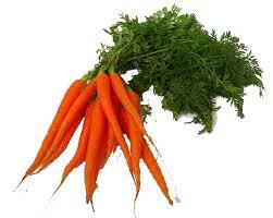 Resultado de imagem para cenoura