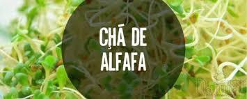 Resultado de imagem para IMAGENS DE RECEITAS COM ALFAFA