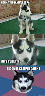 born as insanity puppy becomes creeper canine hits puberty ... via Relatably.com