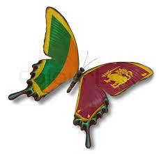 """Résultat de recherche d'images pour """"sri lanka butterfly"""""""