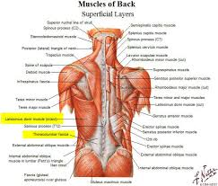 tacoma personal trainer talks about back muscles