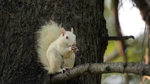 Image result for white squirrel in tree