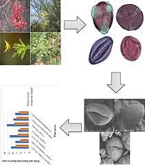 Palyno‐morphological investigations of subtropical endangered ...
