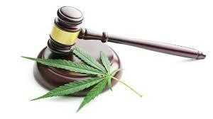 decriminalization of cannabis essay college paper academic decriminalization of cannabis essay