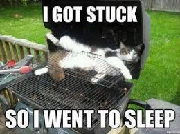Animal Memes - I got stuck - Funny Memes via Relatably.com