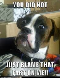 Do Dogs Fart or Do They Just Take the Blame? via Relatably.com