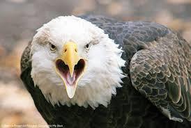 Αποτέλεσμα εικόνας για birds National Geographic