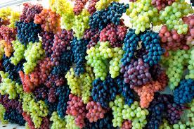 Risultati immagini per uva