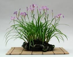 Image result for shitakusa