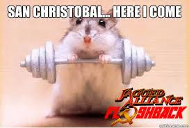 Hamster Memes - Album on Imgur via Relatably.com