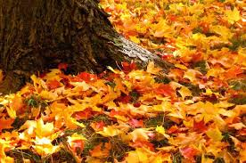 Image result for autumn leaves photos