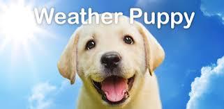 Weather <b>Puppy</b> - App & Widget Weather Forecast - Apps on Google ...