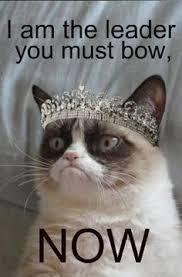 Grumpy cat memes on Pinterest | Grumpy Cat, Grumpy Cat Meme and ... via Relatably.com