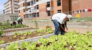 Resultado de imagen para agricultura urbana