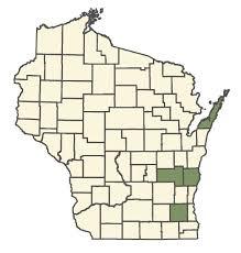 Rhinanthus minor subsp. minor - Online Virtual Flora of Wisconsin