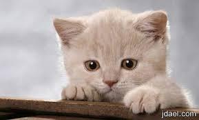 شقاوة قطط أجمل الصور للقطط الشقية