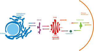 biological membranes essays in biochemistry figure