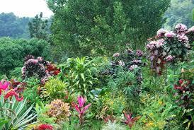Resultado de imagen para flores en la selva tropical