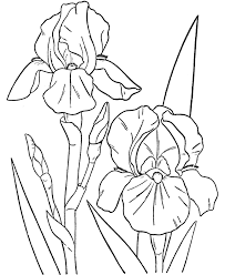 Small Picture Emejing Coloring Pages For Spring Flowers Pictures Coloring Page