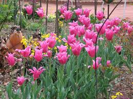 Small Picture Images About Gardens Landscaping On Pinterest Perennials Flower