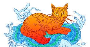 Why Do So Many People <b>Like Cats</b>? - The Atlantic