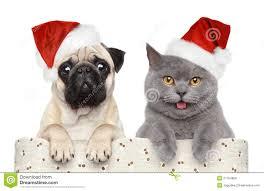 christmas hat cat dog santa