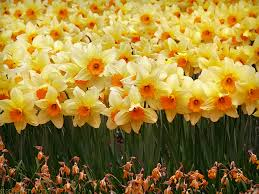 Image result for march month flower