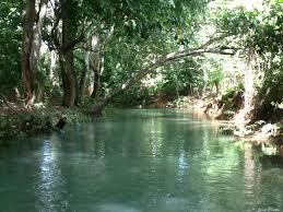 Resultado de imagen para fotosde arboles y rios en RD