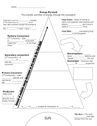 ecological pyramid worksheet energy pyramid worksheets middle ecological pyramid worksheet energy pyramid worksheets middle school invitation samples blog