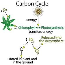 month earth and world peace phytoplankton respiration releases the oxygen back to the air and their decomposition returns the carbon to the ocean carbon cycle