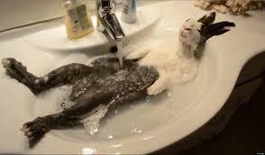kitchen sink waste disposal loose image source http ihuffpostcom gen  tags garbage disposal humor kitche