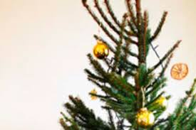 <b>Christmas Tree</b> Recycling - Less Is More
