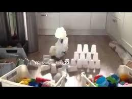 Попугай и пирамида из стаканов - YouTube