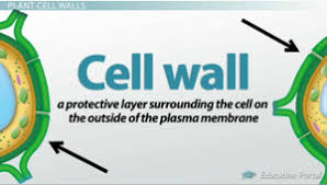 CELL  THE Fundamental   unit of life