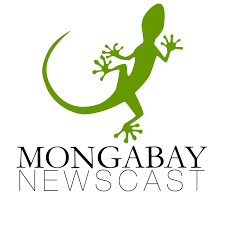 Mongabay Newscast