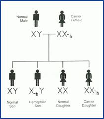 cause of hemophilia   medical information and advicehow is hemophilia passed on from one generation to the next
