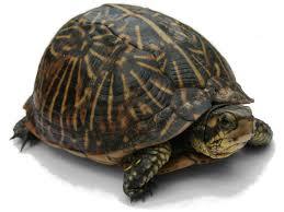 <b>Turtle</b> - Wikipedia