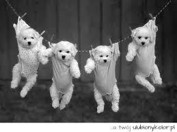 Znalezione obrazy dla zapytania zdjęcia śmieszne psów