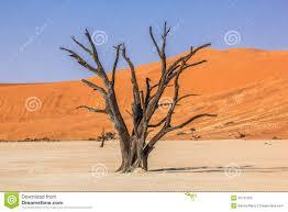 Resultado de imagen de fotos de árboles secos