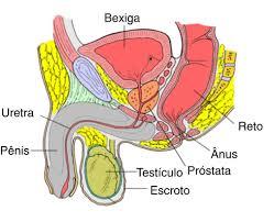 cancer-de-prostata-sintomas-e-tratamento