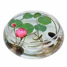 <b>Lotus</b> Plant Water Plants for sale | eBay