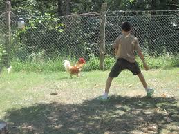 Resultado de imagem para fotos homem correndo atras de galinha