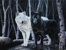 Resultado de imagen de wolves black and white