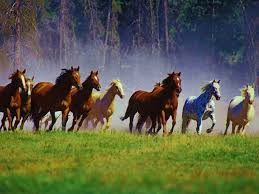 Image result for mustang horses images
