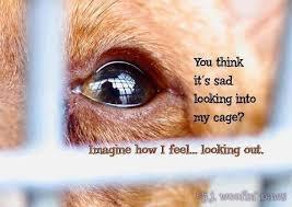 Animal Cruelty Quotes. QuotesGram via Relatably.com