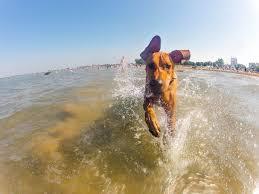 Αντιδράσεις από το υπουργείο Υγείας για τους σκύλους στις παραλίες...