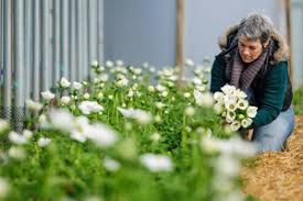 <b>Green</b> and Gorgeous <b>Flowers</b>, Oxfordshire | Naturally Beautiful ...