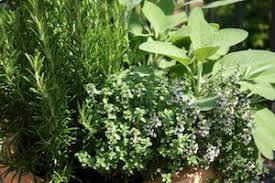 Image result for immune garden