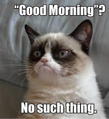Memes Vault Angry Cat Memes Good via Relatably.com